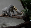 digital photograph koala zoo branch sitting resting zookeeper yellow rubber glove mysterious random pushing holding covering face head surreal bizarre funny