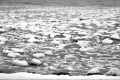 black and white digital photography winter snow ice chunks blobs pieces floating lake water