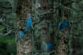 trees forest digital photography blue spray paint moss branches nature