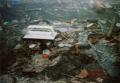 film photograph double exposure trash ground dirt stone bottle caps tampon applicators plastic twigs sticks jumble mess