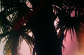 film photography silhouette palm tree tropical colorful