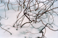 film photography snow branches