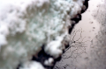 film photography snow puddle reflection branches