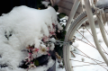flim photograph snow bicycle chain flower