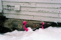 film photograph snow pink plastic flamingoes