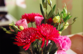 film photograph bouquet flowers colorful red pink daisies