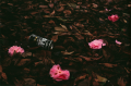 film photograph fallen leaves flowers pink azaleas coffee can trash debris still life dark chiaroscuro