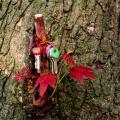 film photograph still life tree branch leaves lost keys hanging