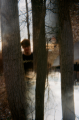 film photograph lomography portrait double exposure trees bare branches winter young man hapa