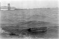 black white film photography beach waves shore cabinet  bridge jamaica bay nyc