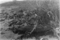 black white film photography beach old rubber tire plants debris