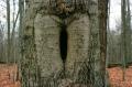 film photography tree bark hole carving love vagina