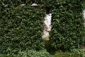 film photograph hedge door window