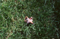 film photograph bird head severed dead grass lawn