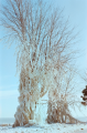 snow winter film photograph ice frozen tree icicle formation