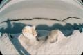 fisheye lens frozen lake crack ice shadow