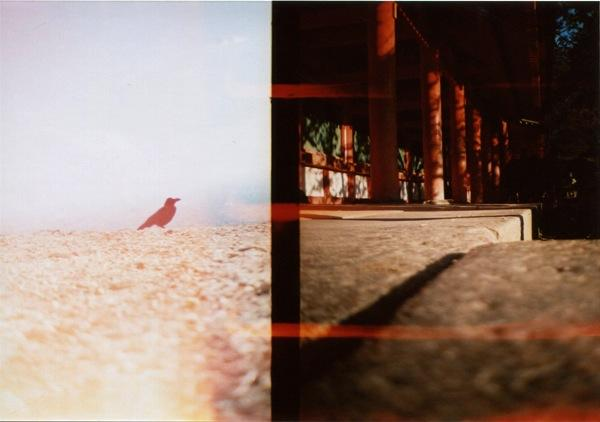 film photograph crow diptych lomography red pillars temple chiaroscuro light dark multiple exposure red pillars solitary bird composition diptych strange bizarre surreal