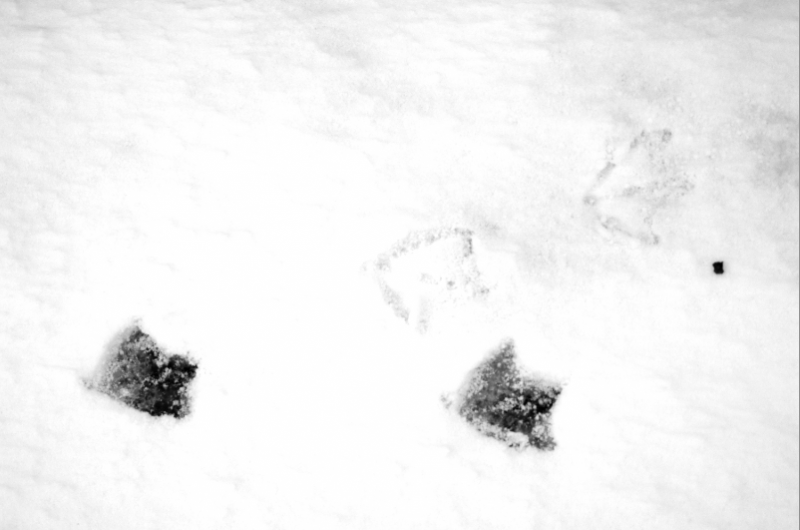 photograph of starlike gull bird footprints in the snow black and white abstract winter