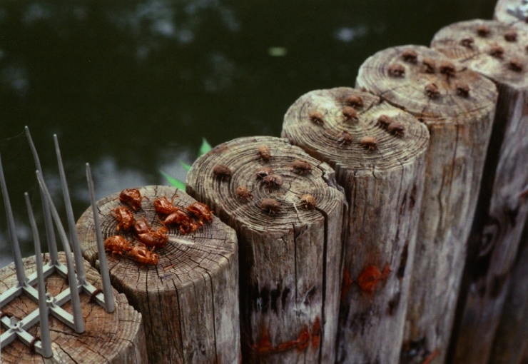 film photograph wooden fence round post metal graffiti dried dead bugs beetles water pond still life