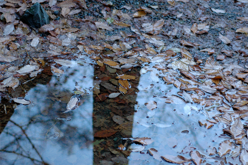 photograph of a puddle with wet leaves reflecting a tree trunk water shine reflection composition nature