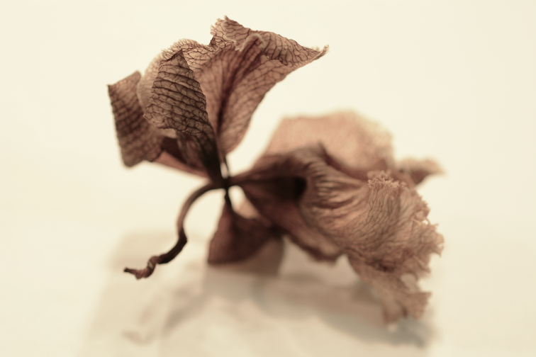sepia tone old vintage retro shadowy boke blur focus veins dried flowers stems scales patterns textures leaves streaks petals blossoms wrinkled curled withered surreal