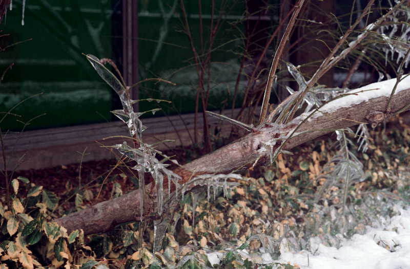 winter icicles branches trees ice spiky