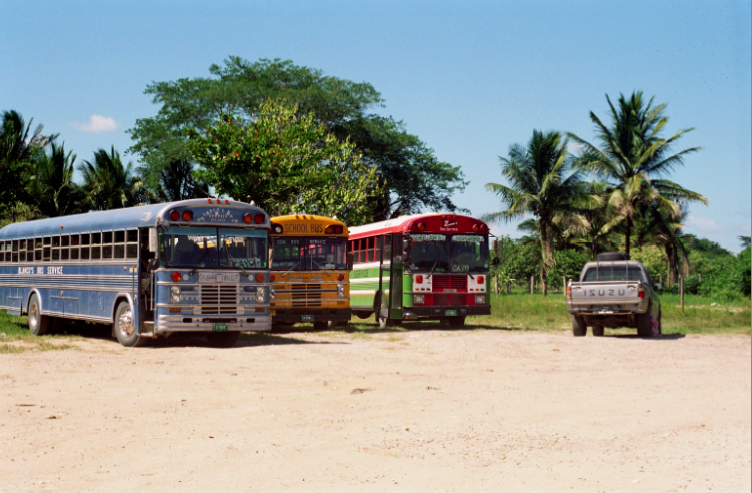 film photography buses schoolbus tropical palm tree