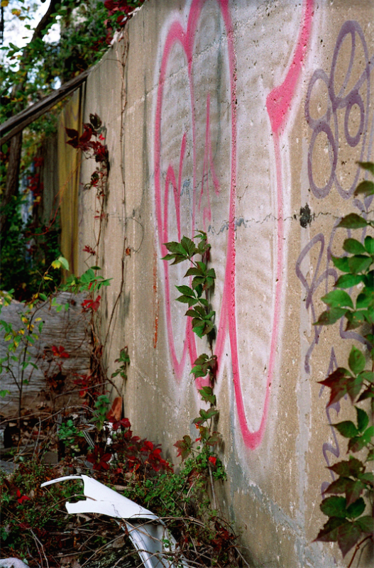 abandoned building film photograph wall graffiti ivy colorful