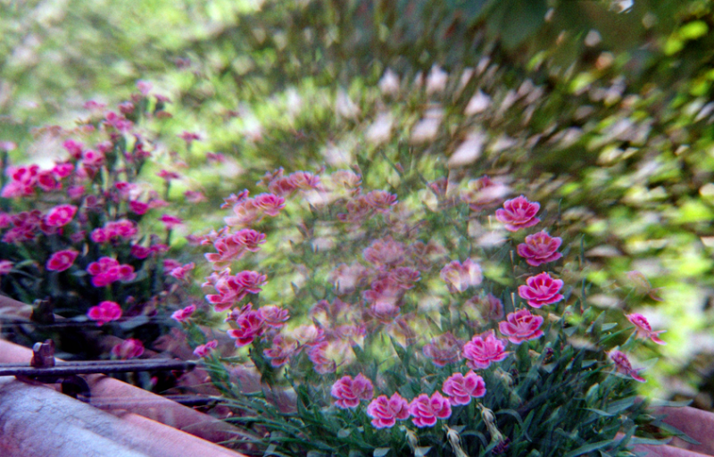 film photography prism lens fractal trippy psychedelic spiral flowers purple pretty nature