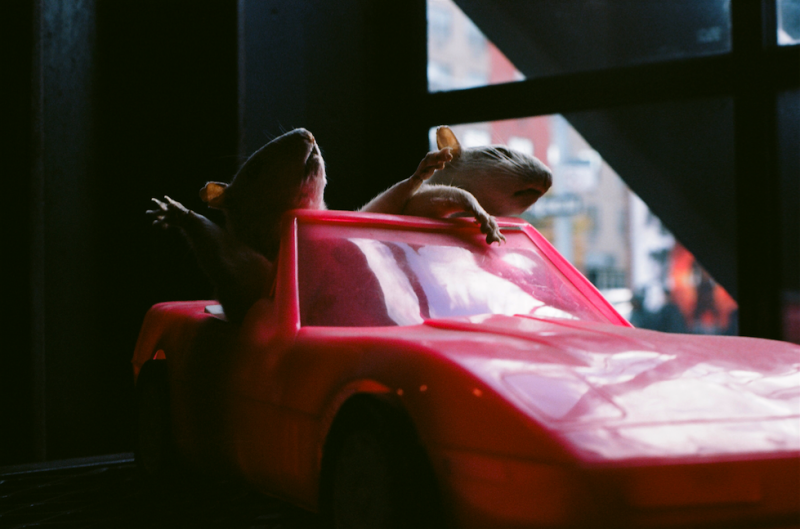 film photograph white mice riding pink plastic car taxidermy stuffed animals silly funny party
