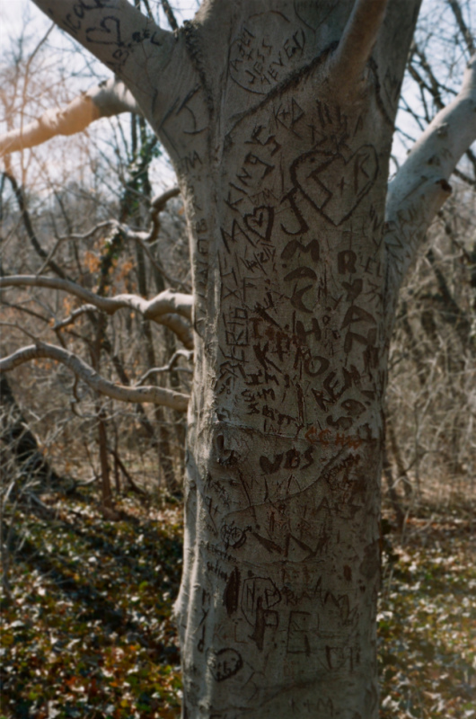 tree bark carvings initials park bare branches winter early spring sunlight
