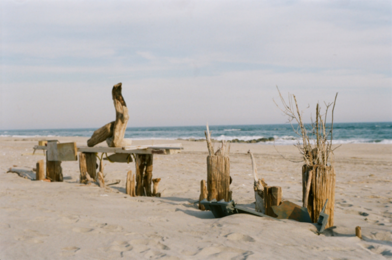 film photograph beach sand driftwood sculptures