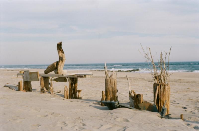 film photograph beach sand driftwood sculptures