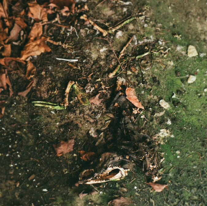 film photograph dead animal skeleton bones earth ground leaves squirrel moss