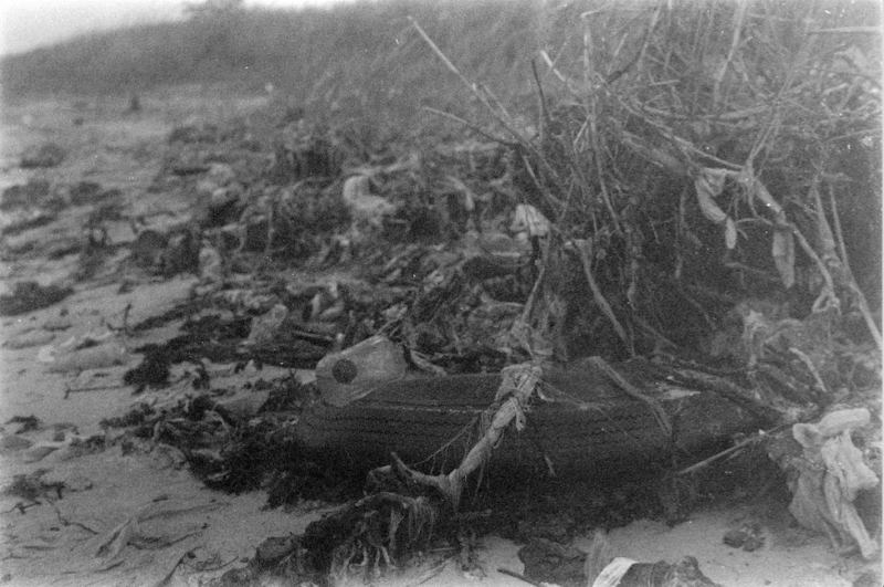 black white film photography beach old rubber tire plants debris