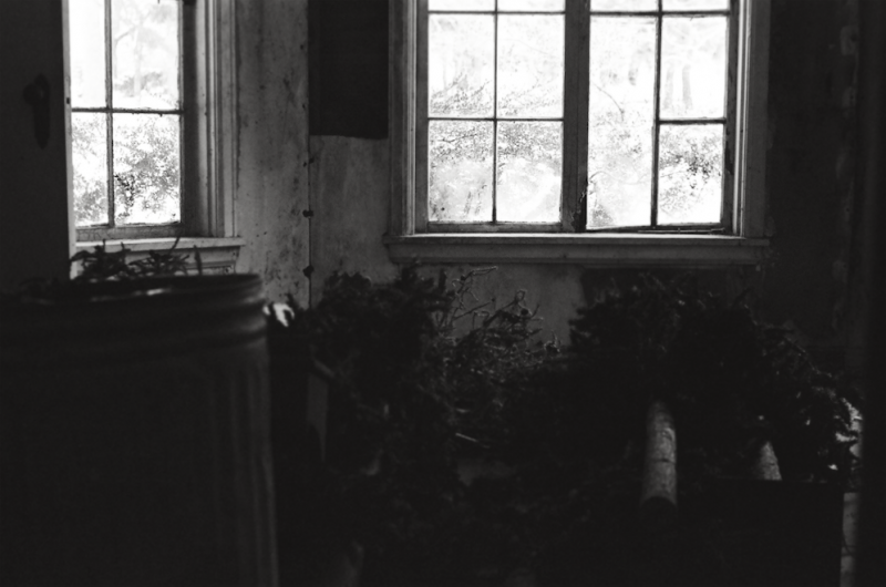 abandoned urbex film photography windows chiaroscuro christmas trees