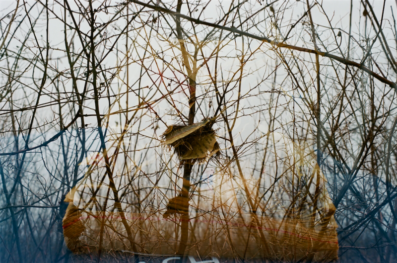 film photograph double exposure multiple lomography lomo branches dead winter trash newspaper nest