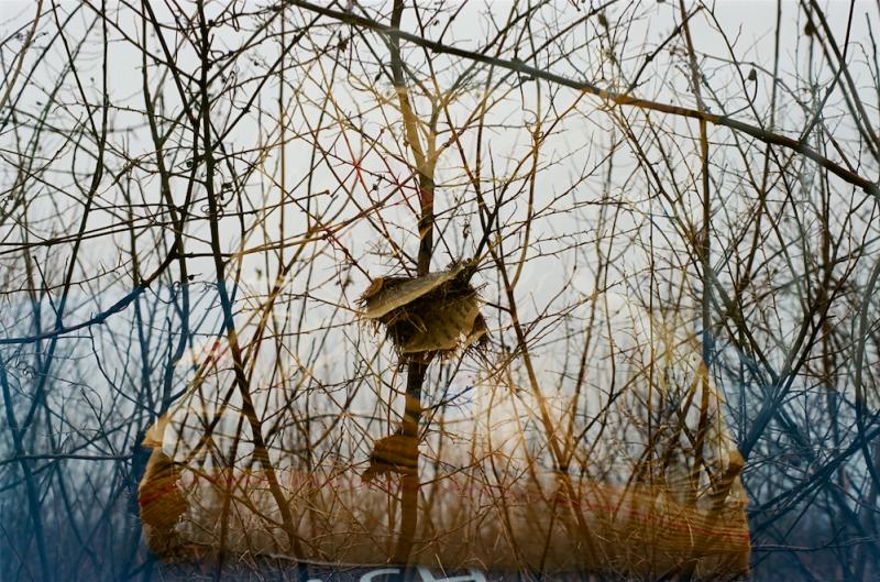 film photograph double exposure multiple lomography lomo branches dead winter trash newspaper nest