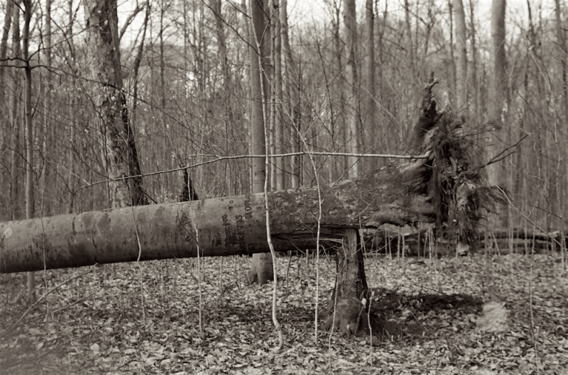 film photograph tree broken forest winter dead split