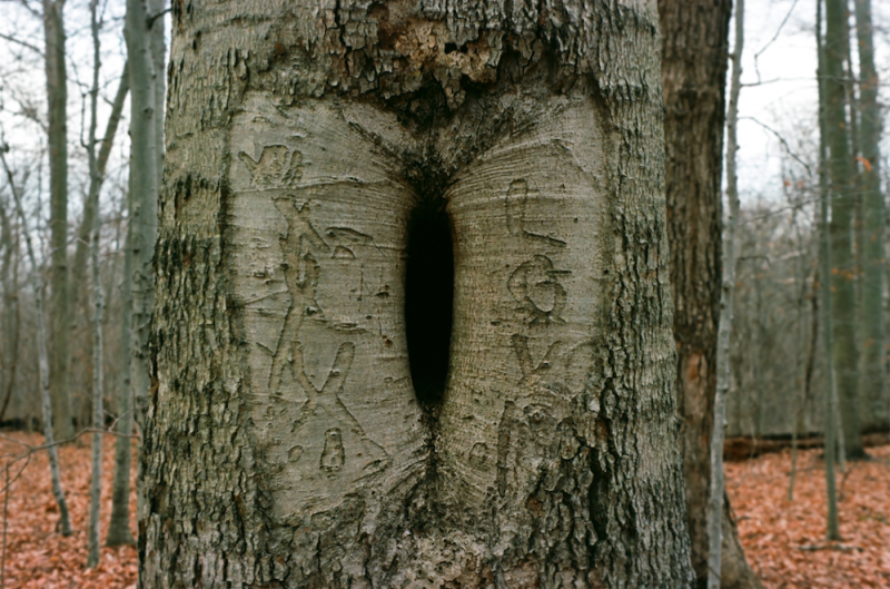 film photography tree bark hole carving love vagina