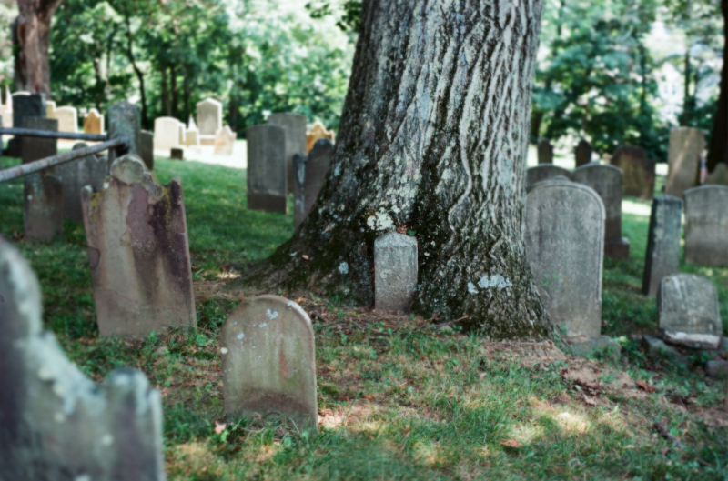 film photograph gravestone tombstone cemetery tree growing swallowed old sleepy hollow grass