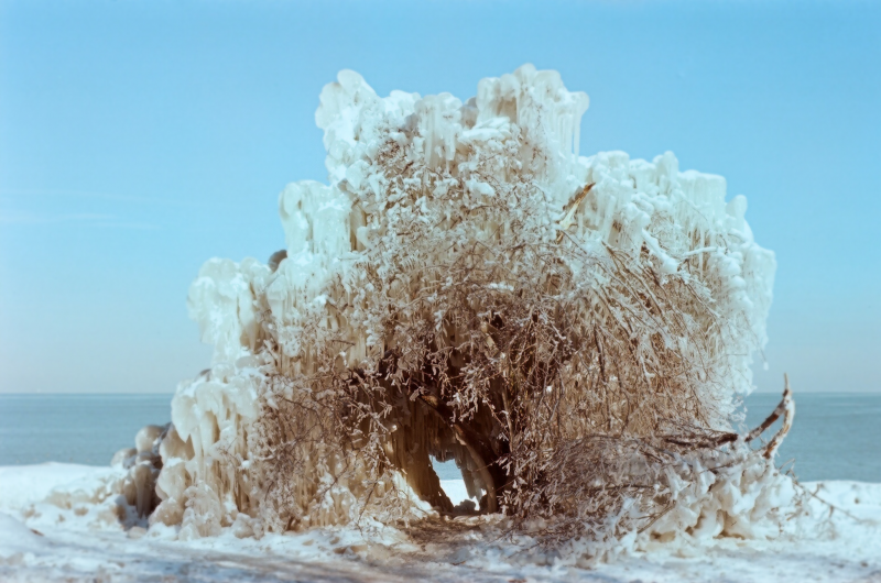 snow winter film photograph ice frozen tree completely formation icicle