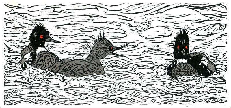 linocut relief print printmaking washi black and white ducks waterfowl illustration red breasted merganser water waves squawk funny narrative art comic