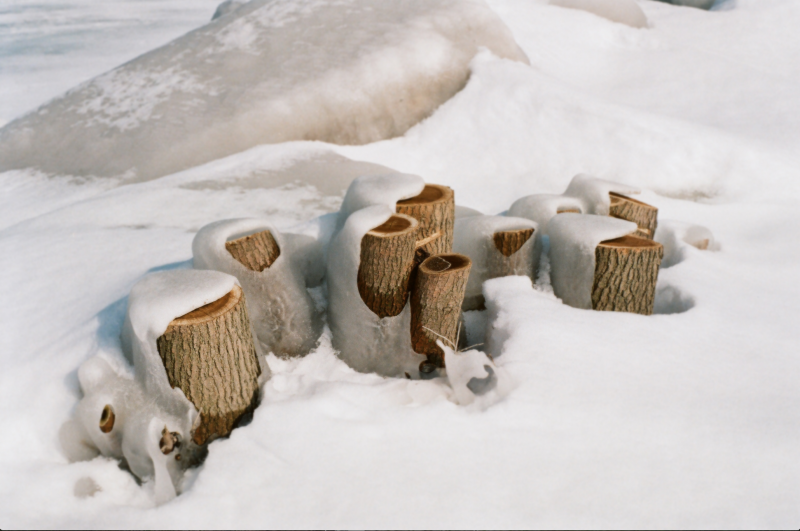 fisheye lens frozen snow tree stumps