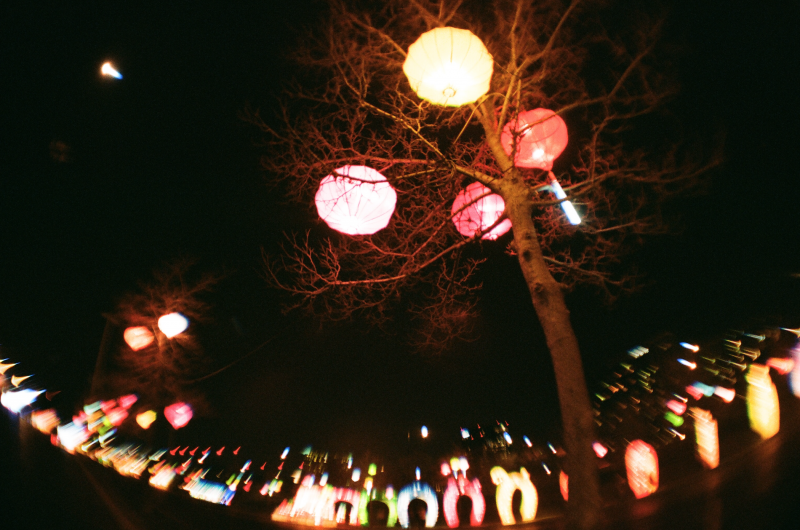 lantern night trees festival dragon chinese fisheye lens