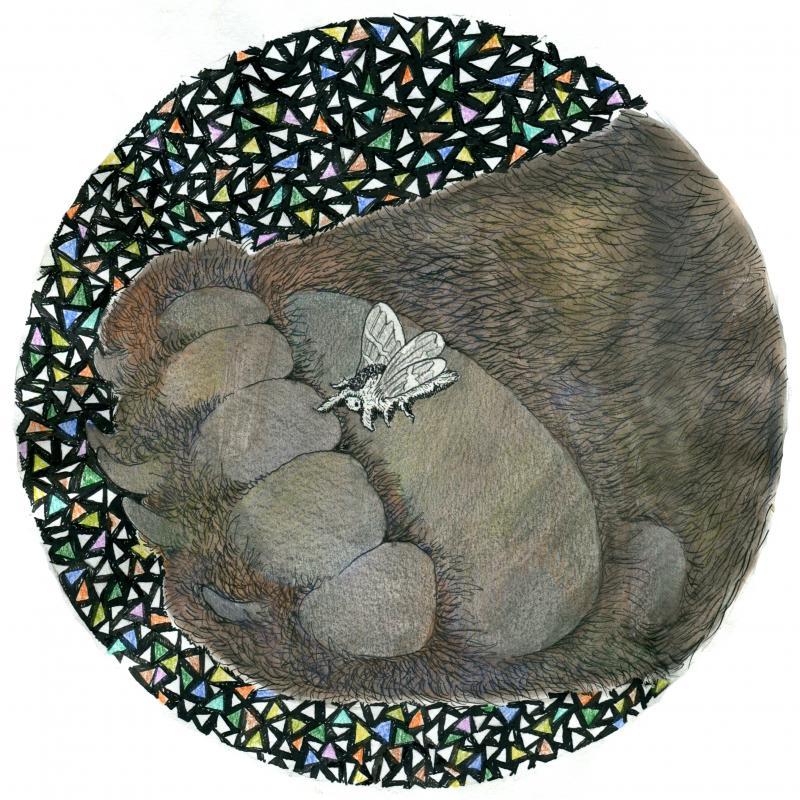 black white ink drawing illustration bear paw white moth