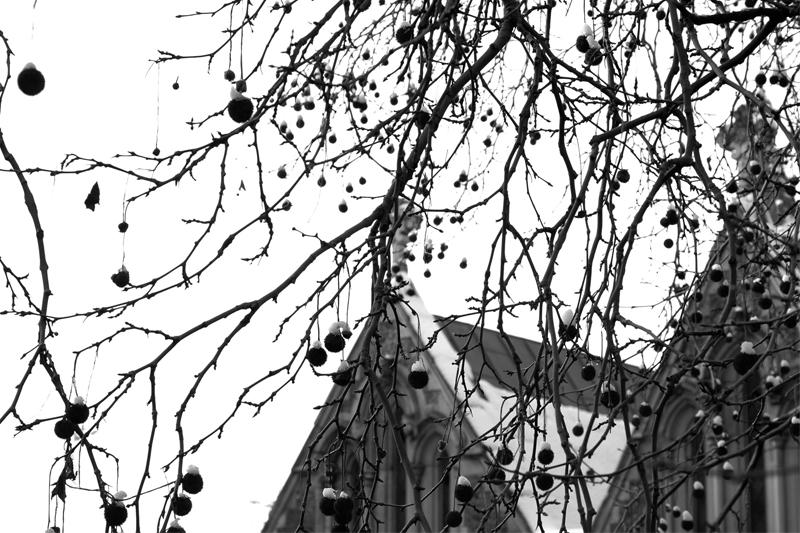 snow covered conkers with church in background snow-dusted hanging tree great roof framed shadow silhouette bright chiaroscuro contrast nature composition