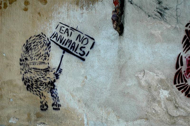 photograph of graffiti on a wall cute strange funny animal holding sign saying eat no animals anti meat vegetarian adorable funny