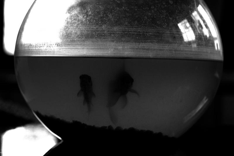 a dark photo shot of a glass fishbowl with two goldfish sad murky dirty shadowy chiaroscuro black white contrast light flash reflection water