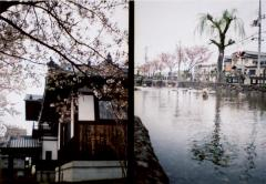 film photograph Japan cherry blossoms traditional house trees river water wood lomography spring